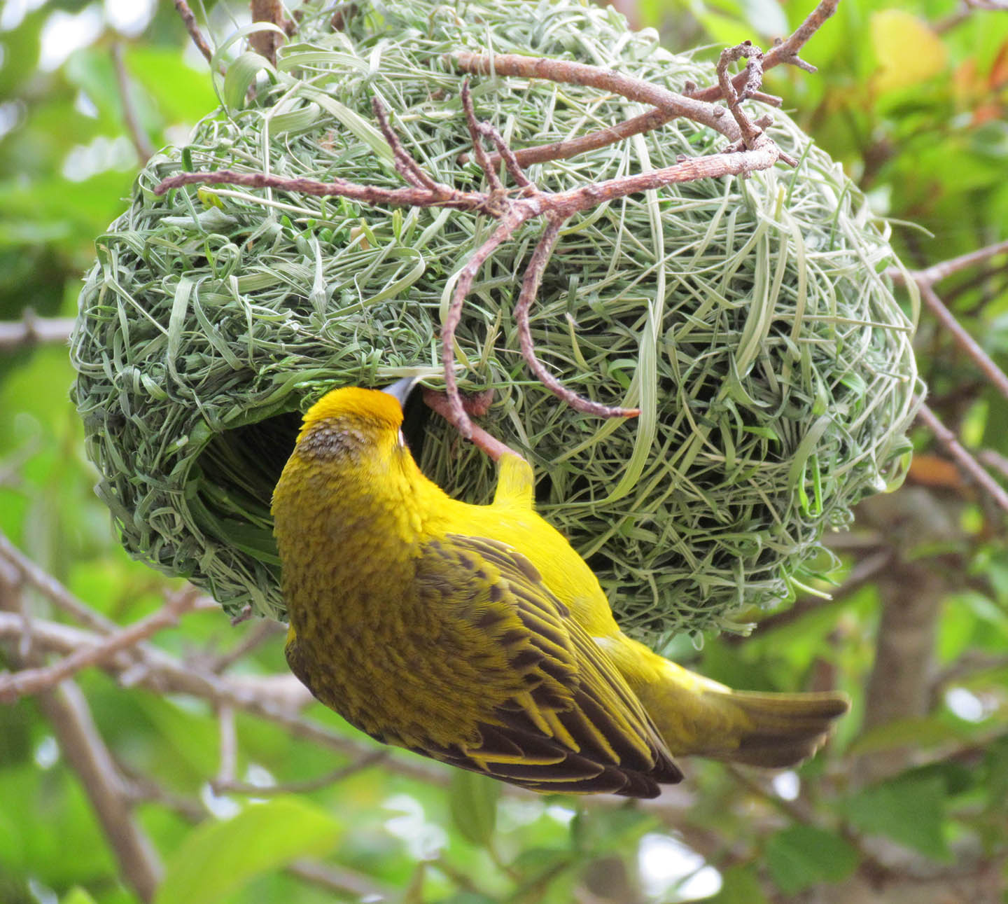 Fancy Bird Nest